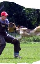 Sergej-Gert und Joy vom Wolfhager-Land